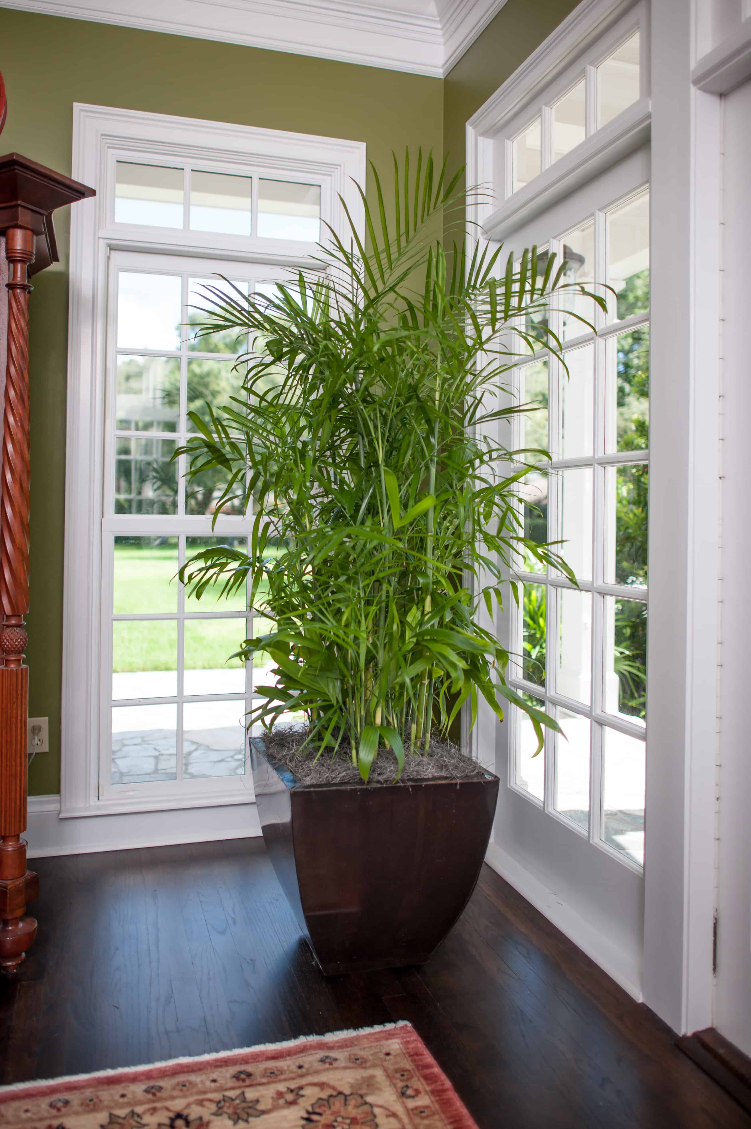 air-purifying-bamboo-palm-plant Palm Plants For Home on herb plants for home, water plants for home, potted plants for home, indoor plants for home, vine plants for home, decorative plants for home, tropical plants for home,