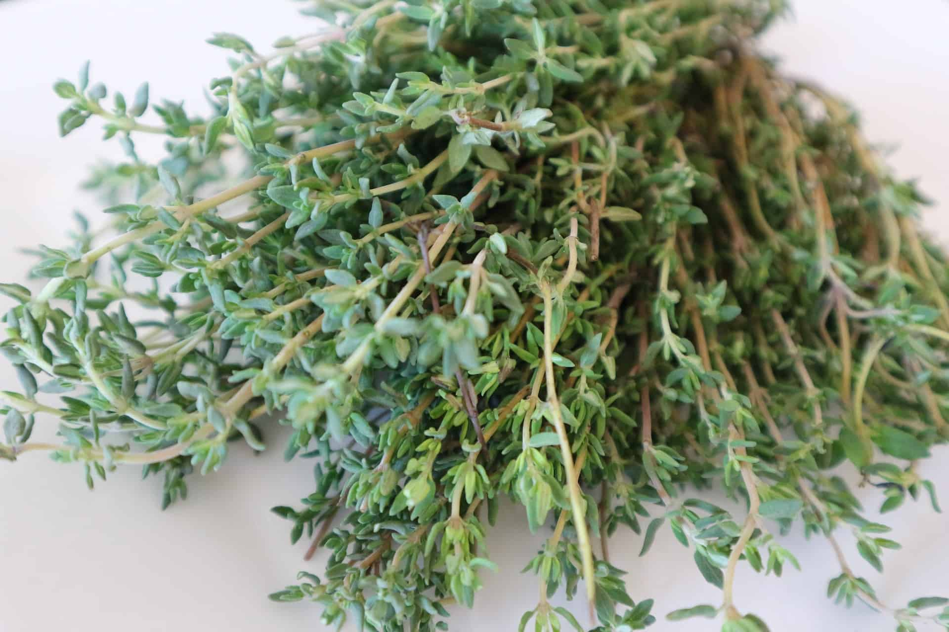 thyme plant ant repellent
