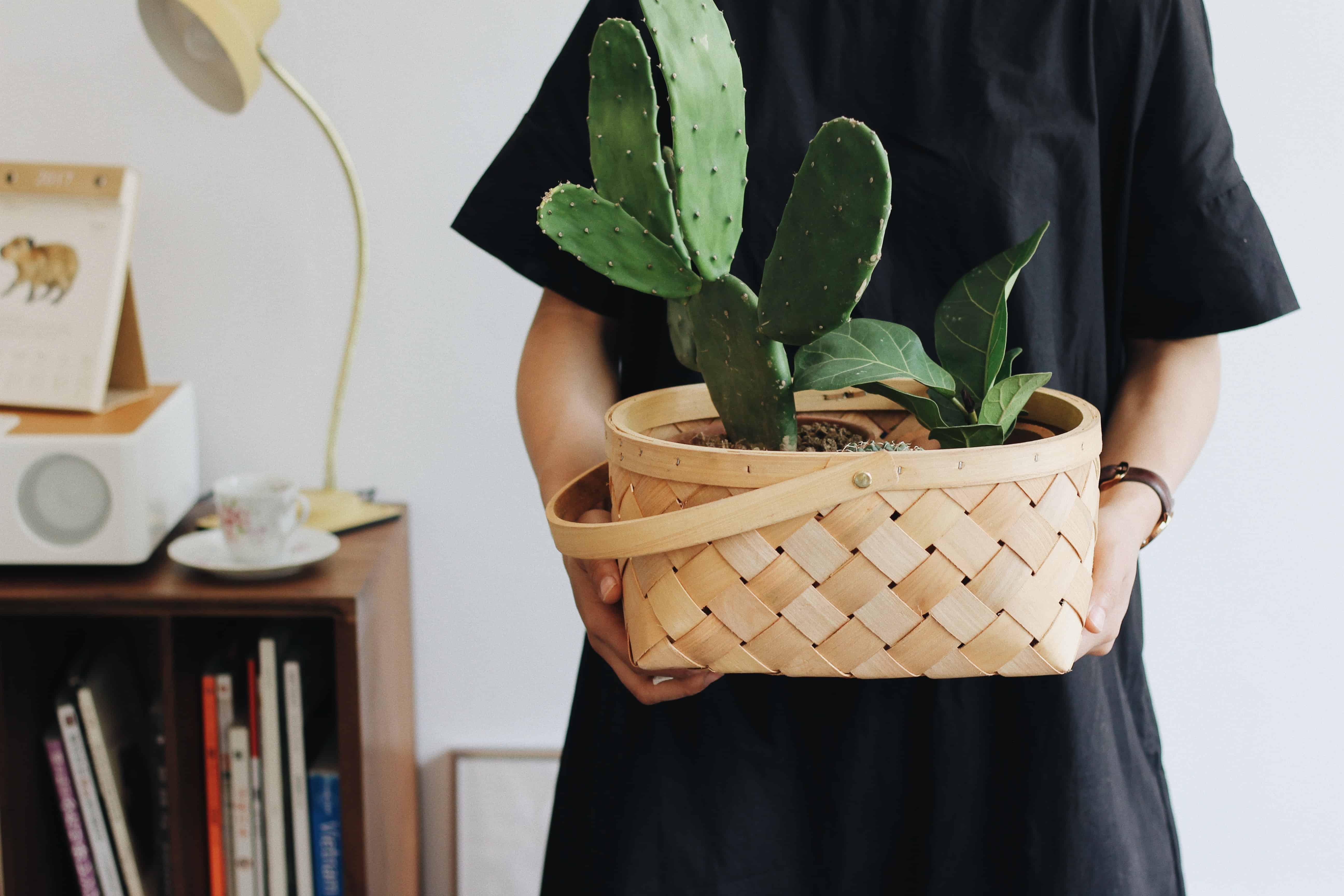 holding cactus plant